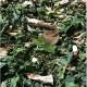 ANAMU-GUINEA-HENWEED-GUINEA-HEN-WEED-