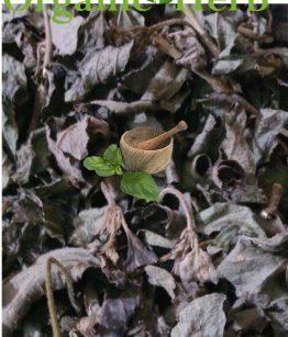 Dried-Jack-In-The-Bush-(Eupatorium-Odoratum)
