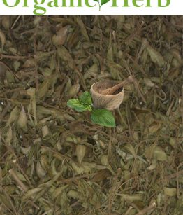 Dried-Jamaican-Mint-Tree