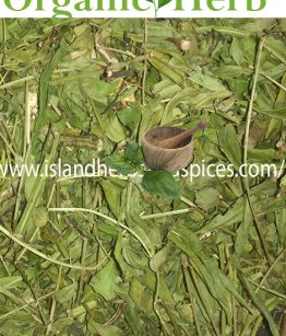 JAMAICAN-DANDELION-PLANT-(CASSIA-OCCIDENTALIS)-LEAVES-AND-ROOTS