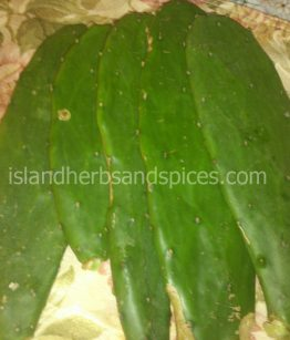 Jamaican-Tuna-Prickly-Pear-OpuntiaFicus-indica