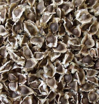 moringa oleifera arvore,moringa oleifera americanas,moringa oleífera anvisa,moringa oleifera alkans,moringa oleifera atacado,moringa oleifera a arvore da vida,moringa oleifera ajuda a emagrecer,moringa oleifera a arvore milagrosa,moringa oleifera artrite,moringa oleifera abaixa a glicose,moringa oleifera abelha,moringa oleifera abortifacient,moringa oleifera about,moringa oleifera abre o apetite,moringa oleifera abstract,moringa oleifera é abortiva,moringa oleifera acacia branca,moringa oleifera acne,moringa oleifera academico,moringa oleifera acquisto,moringa oleifera acquisto piante,moringa oleifera active ingredient,moringa oleifera active constituents,moringa oleifera aceite