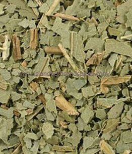 dried-Eucalyptus-Eucalyptus-Globulus