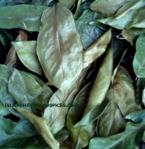 dried-Sour-Sop-leaf