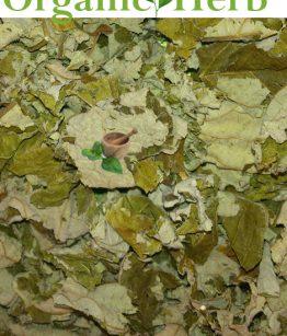 herb-trumpet-tree-leafs
