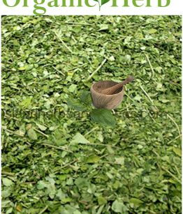 moringa-powder-470x558