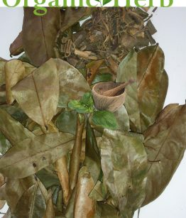 soursop-leaf-and-barks