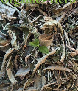 Nettle-(Urtica-Dioica)