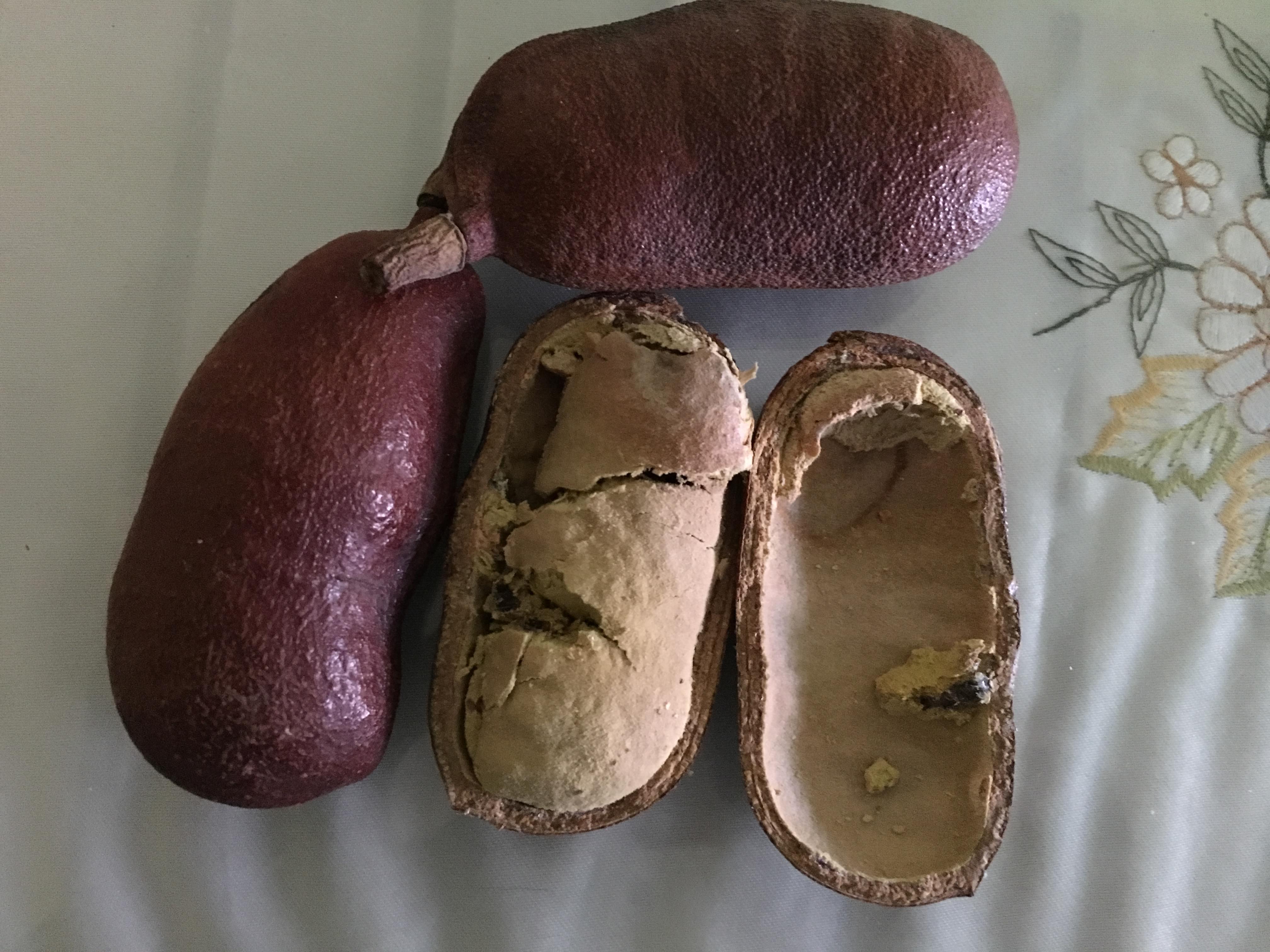 Stinking toe fruit jamaica