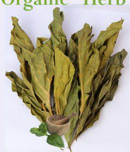 Noni-Leaves-