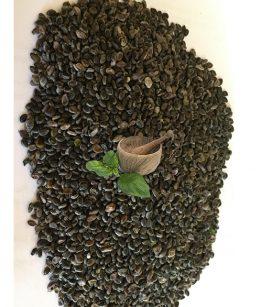 Jamaican-Dandelion-Plant-(Cassia-Occidentalis)-Seeds