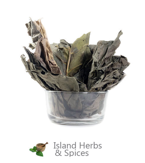 Noni Leaves Island Herbs Spices